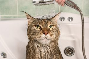Cat Bath Time Survival Guide